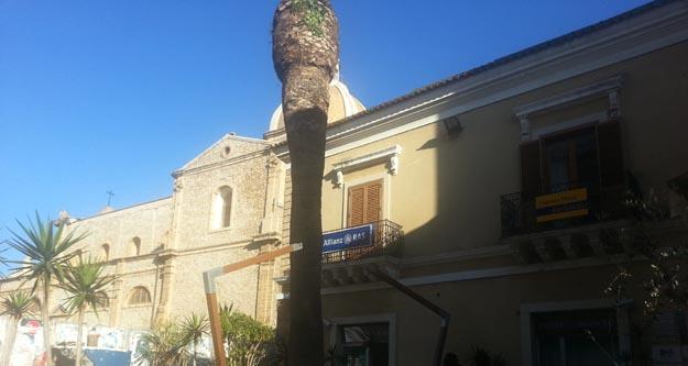Il punteruolo rosso uccide un pezzo di storia l antica - Storia di palma domenica ks1 ...